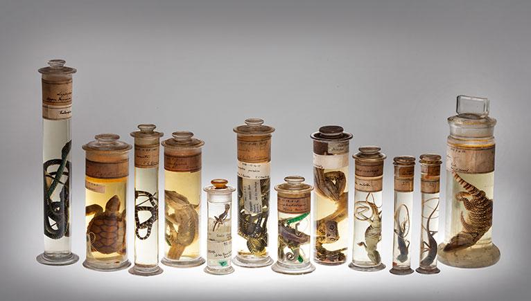 Spirit Collection Natural History Museum specimen